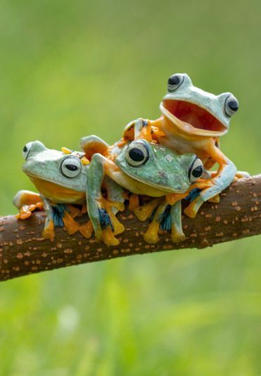 Always one in the crowd – Animal photos of the week January 2015