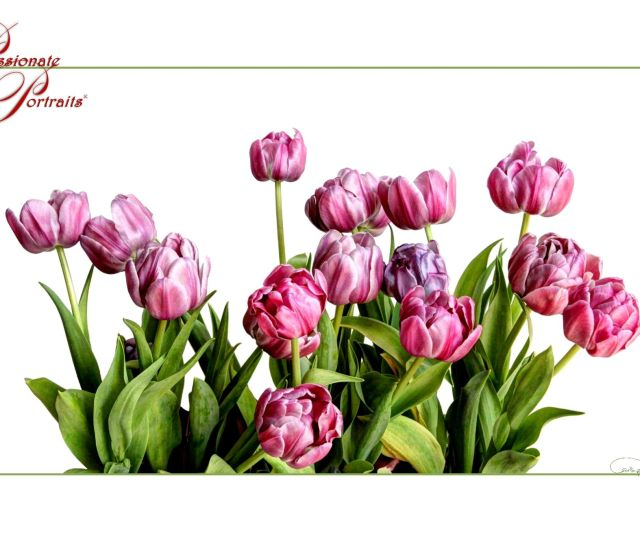Tulips Is My Happy Print I Have It In My Office To Brighten