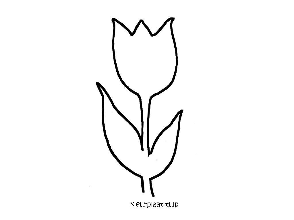 Kleurplaat Tulp Wereldvanwiepje