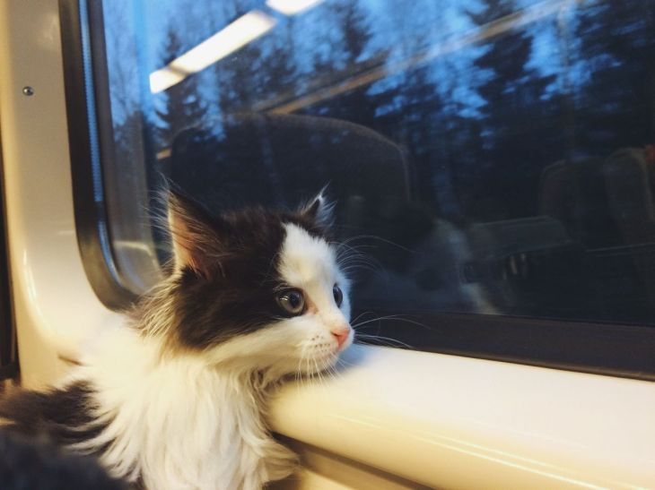 she is going on a big adventure  Cats Cats Cats  Pinterest  Cat