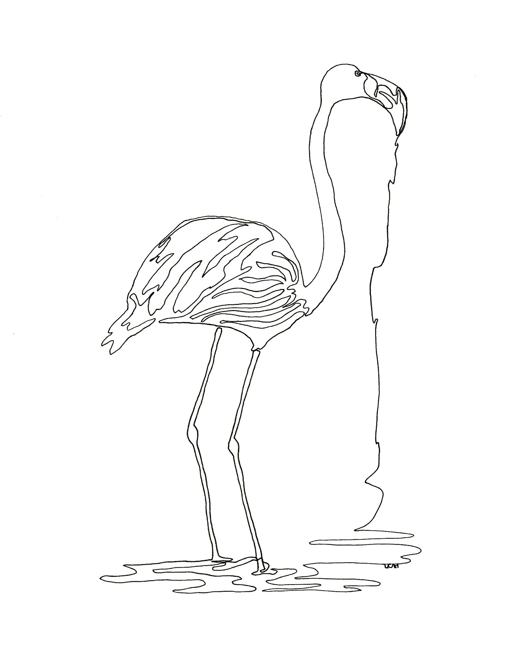 Flamingo Continuous Line Drawing