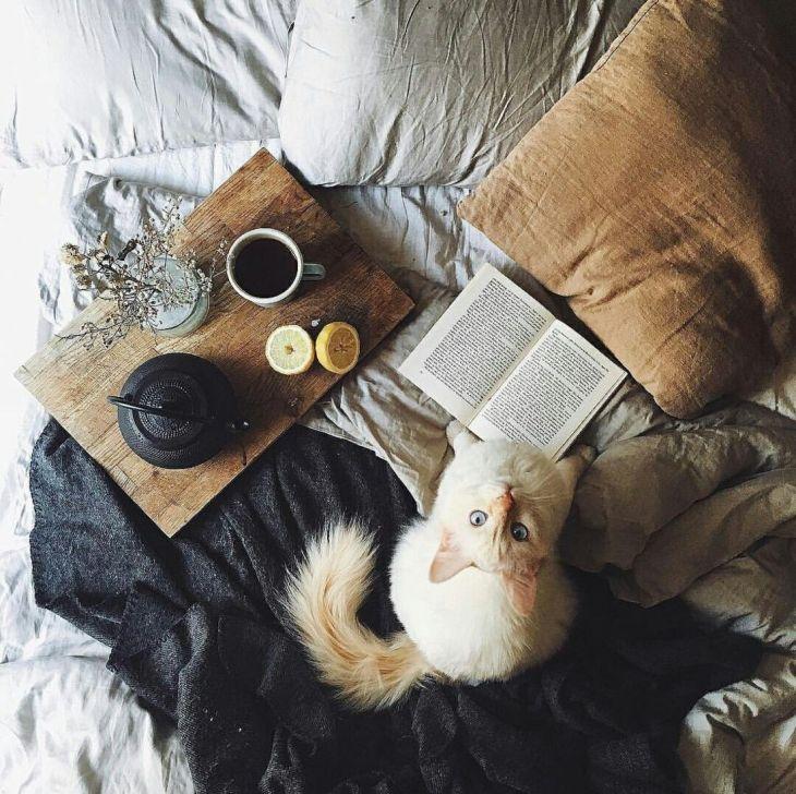 El tiempo pasado con gatosnunca es tiempo perdido