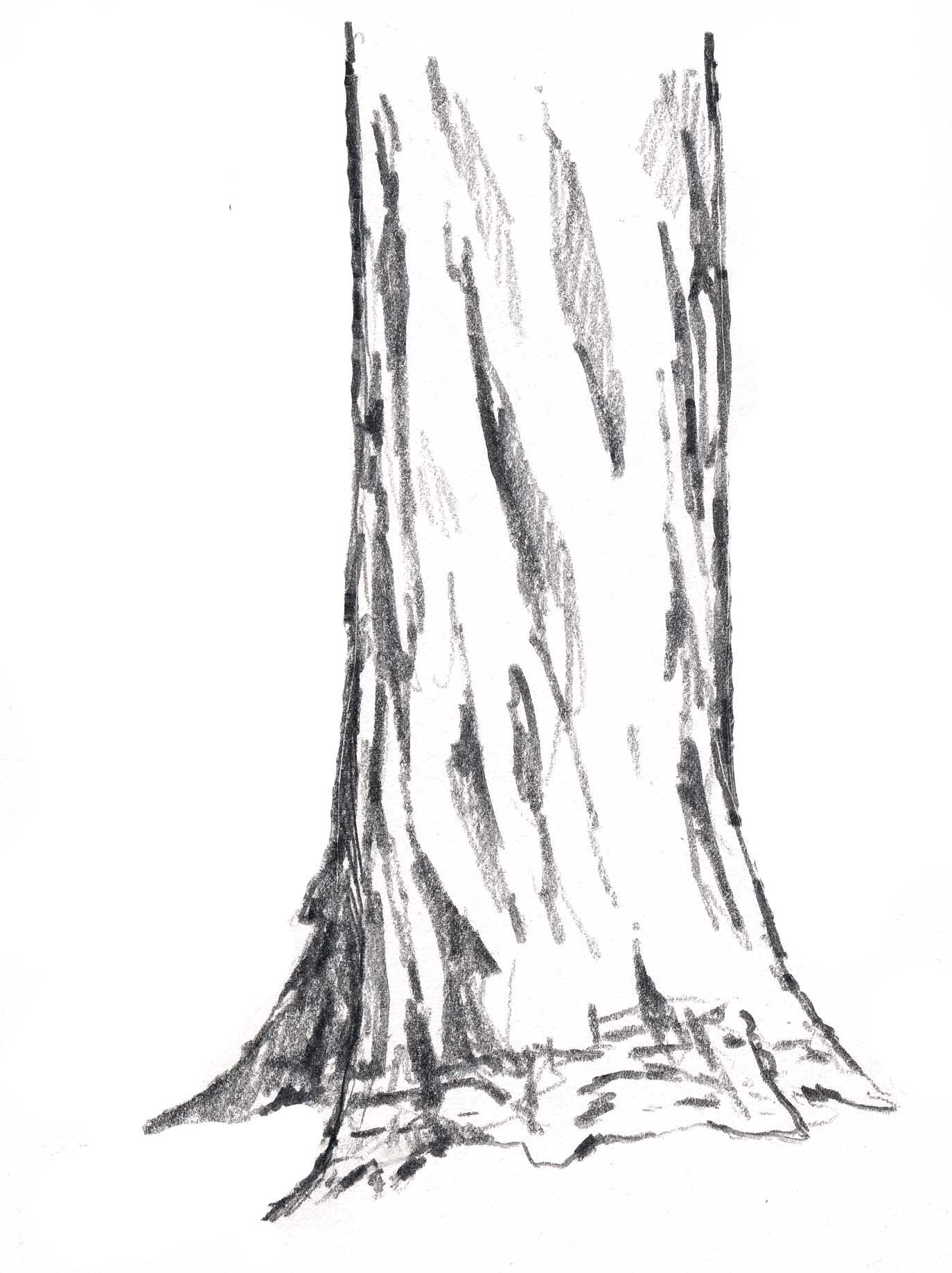 How To Draw Trees Vertical Cracks