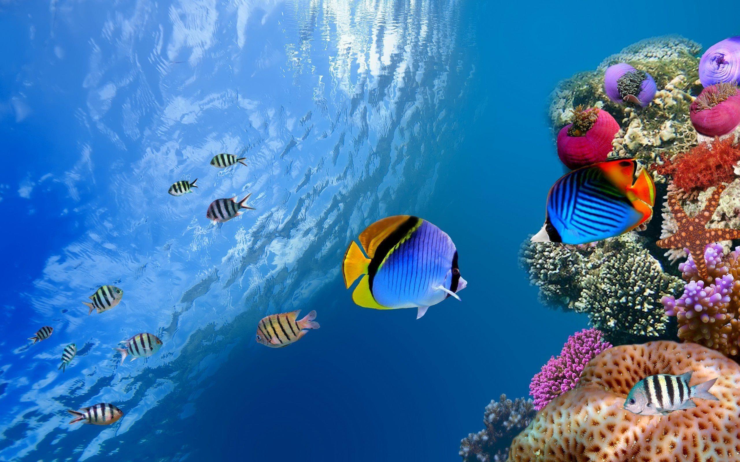 underwater eden coral reef free desktop background - free