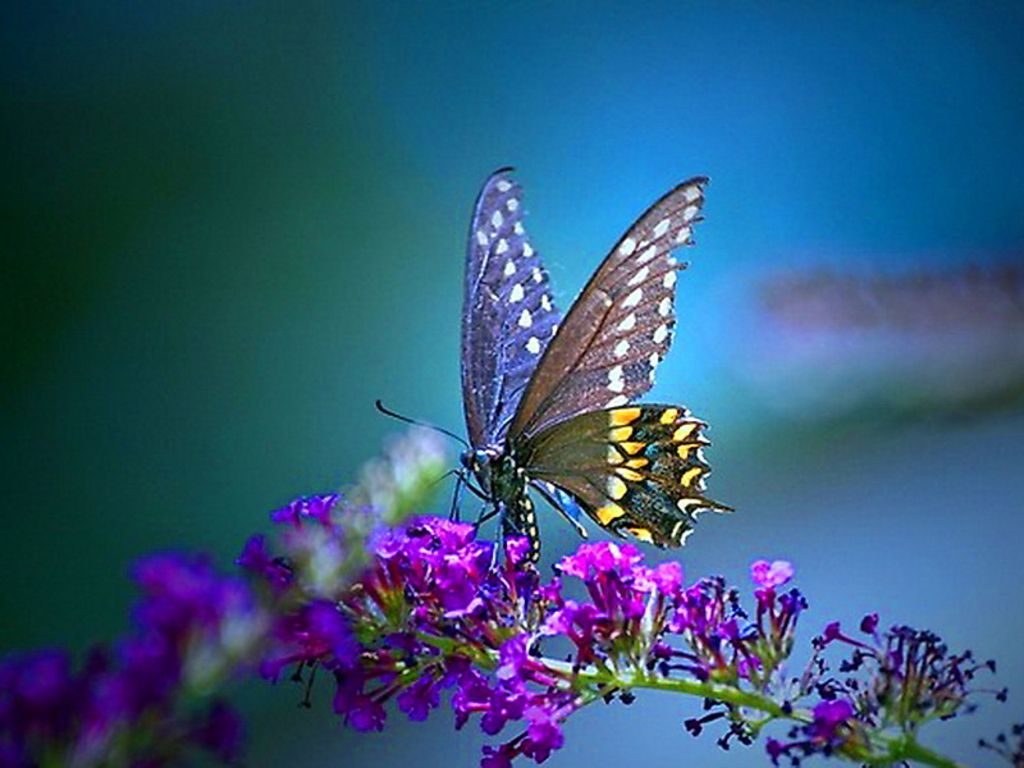 most stunning butterfly pictures | butterfly wallpaper