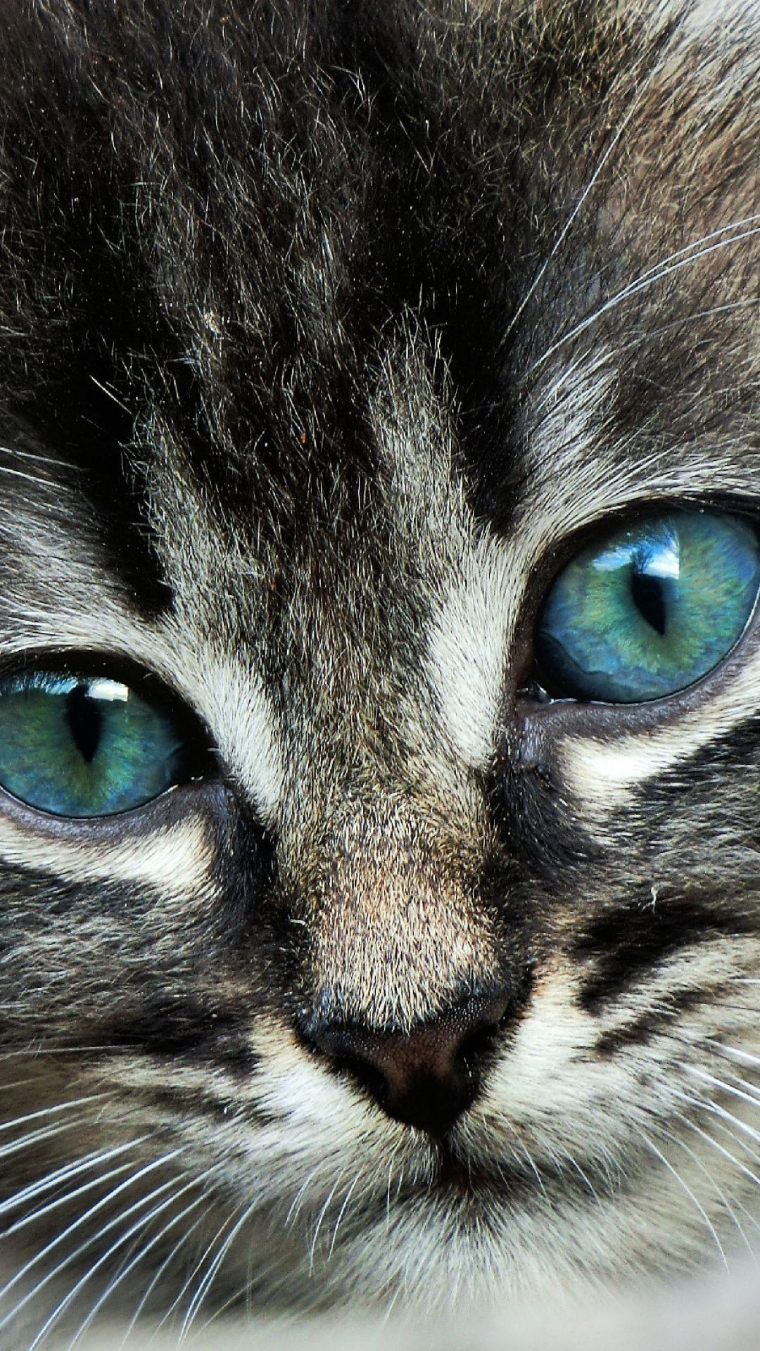 download wallpaper 1080x1920 cat, face, eyes, color sony xperia z1