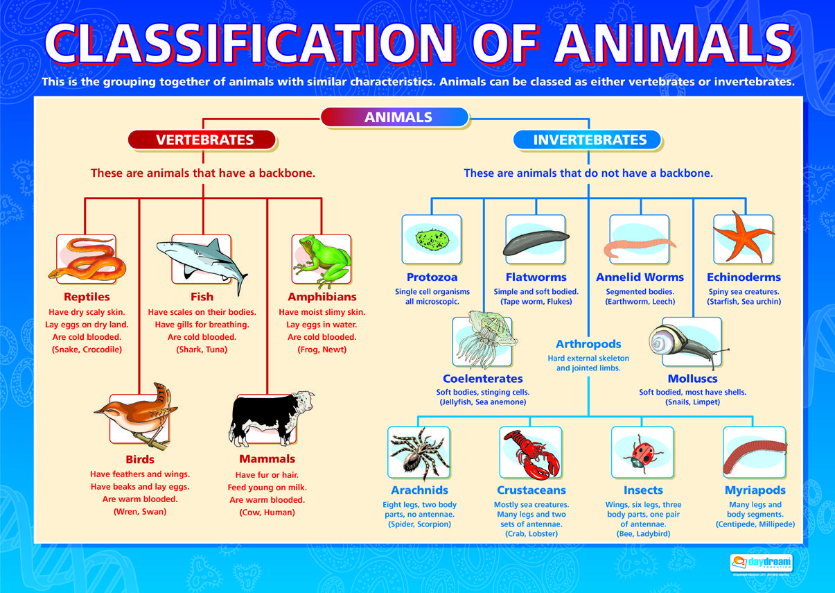 Classification 2
