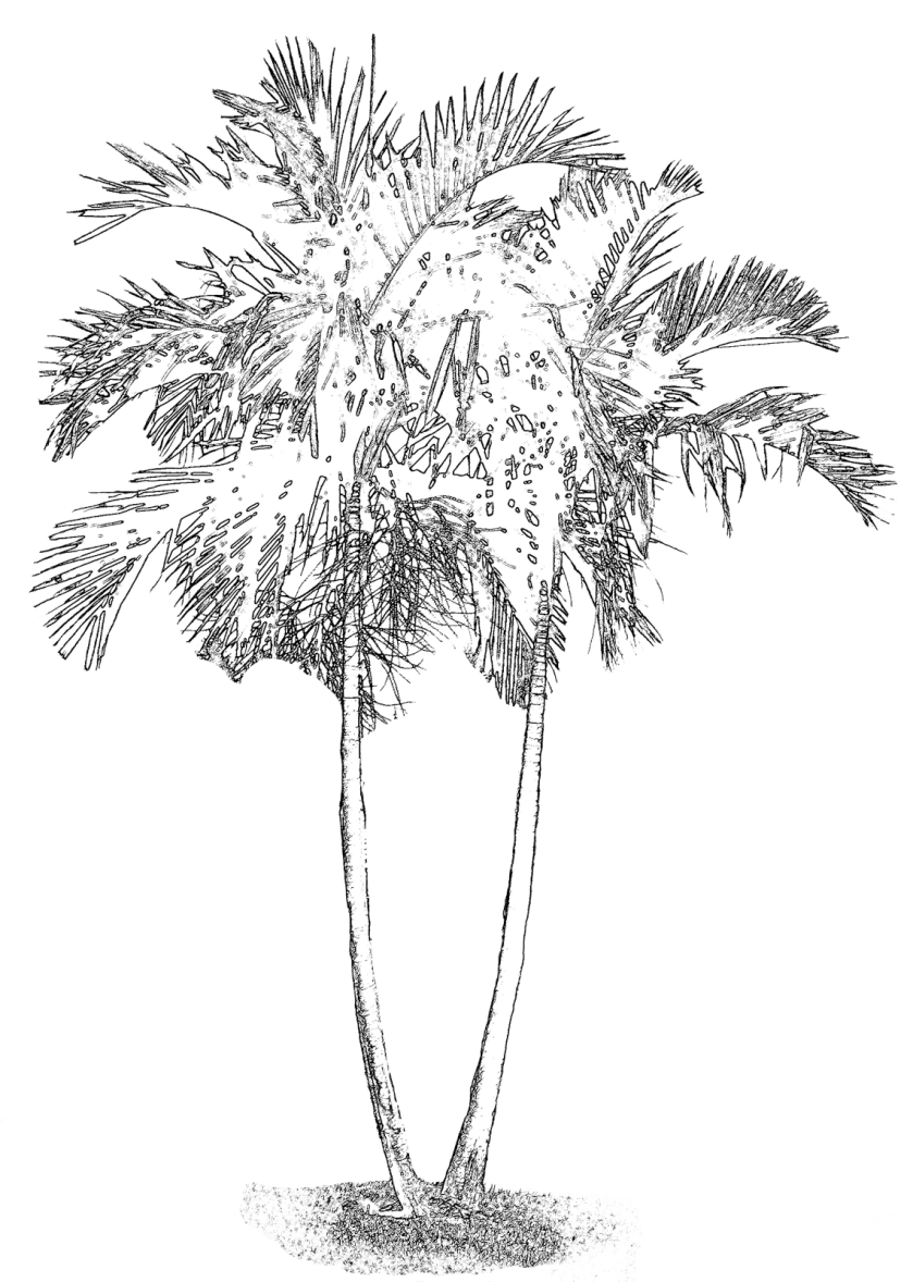 everything 4 scrapbooking free palm tree digi stamp #2