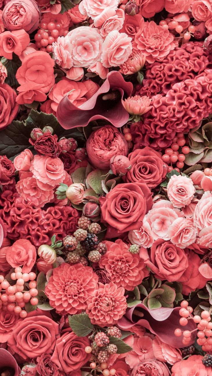 Pin by Daria Russ on Wallpapers Flowers Pinterest
