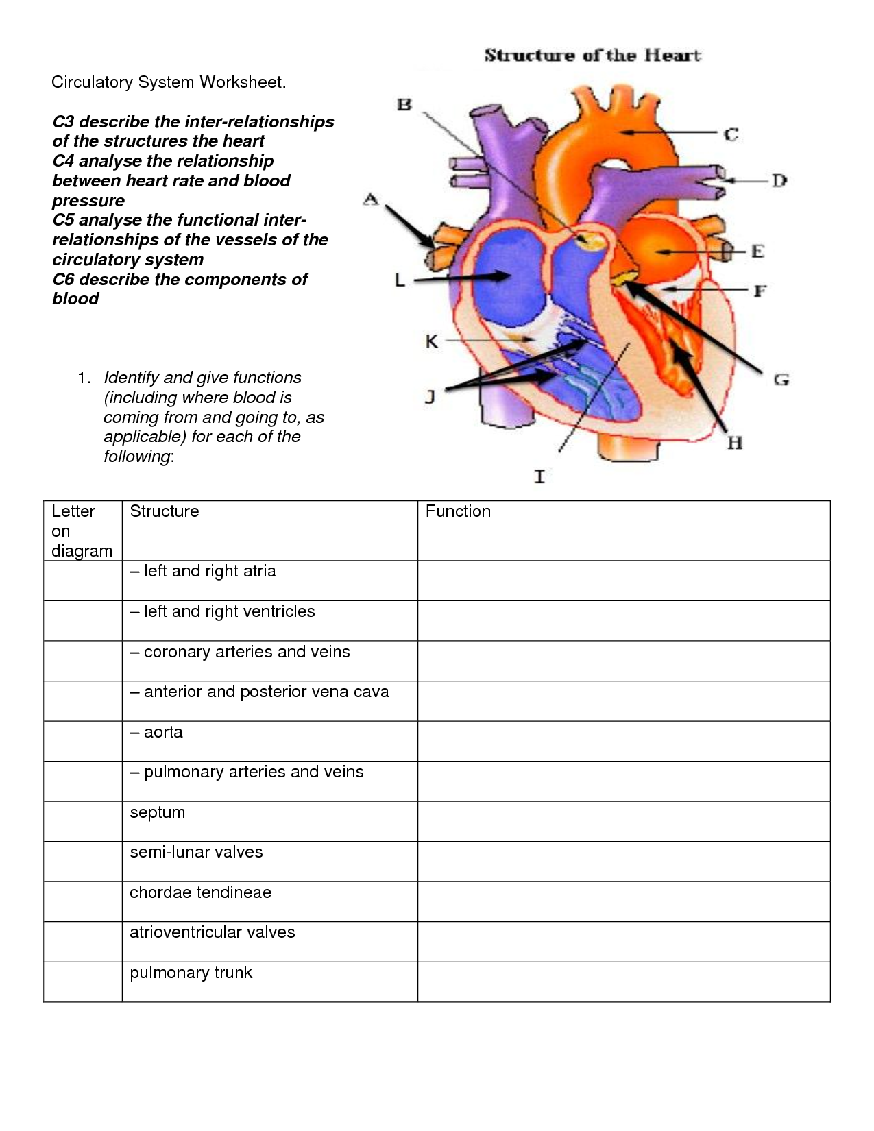 Circulatory System Diagram For Kids