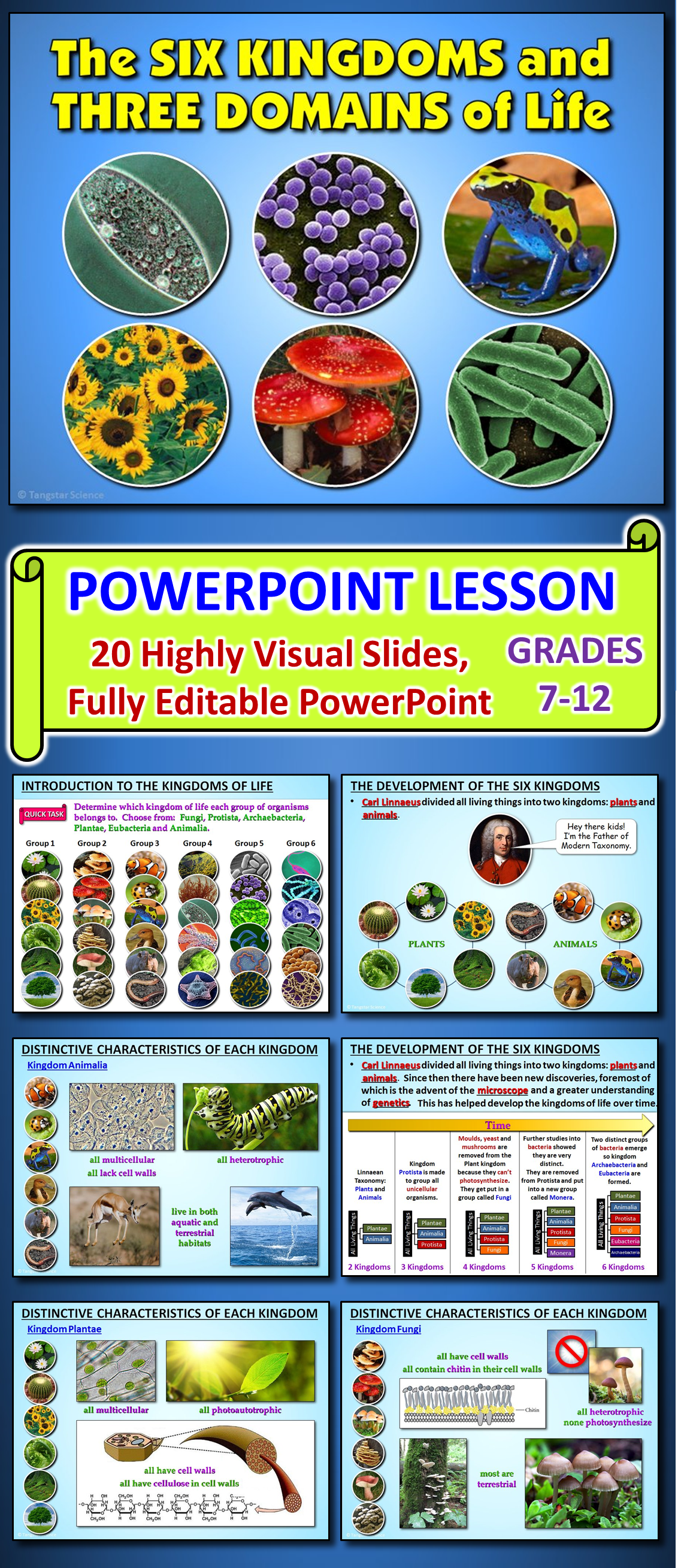 This Highly Visual And Fully Editable Powerpoint Contains