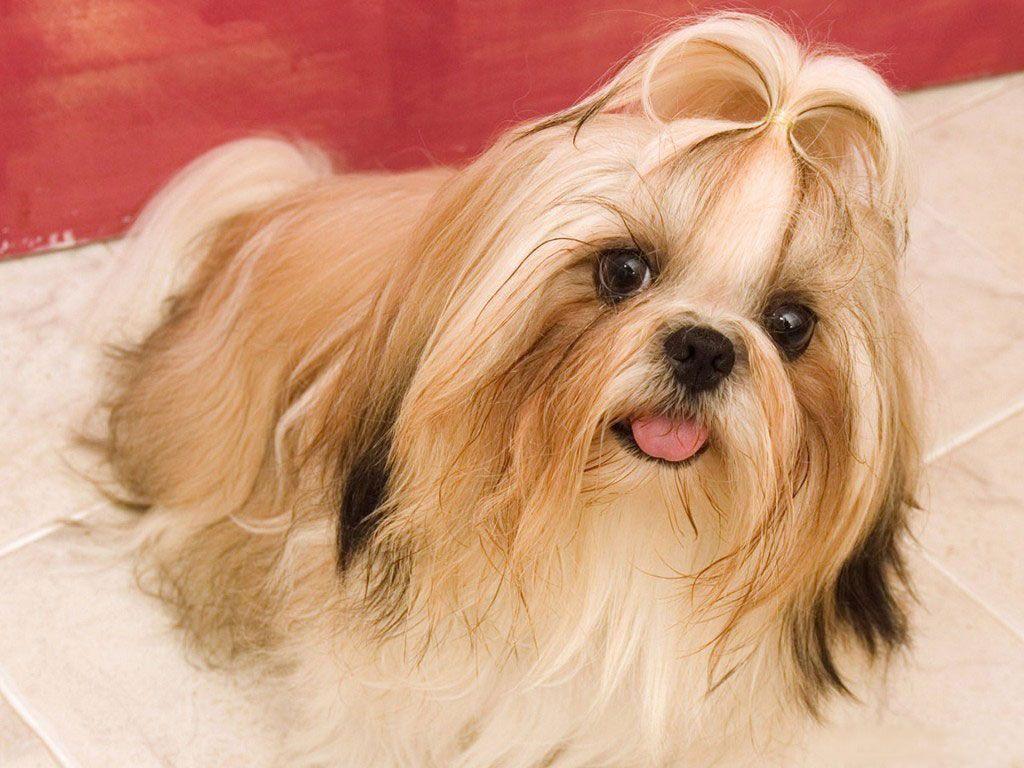 25+ best cute puppy wallpaper ideas on pinterest | pets, pet