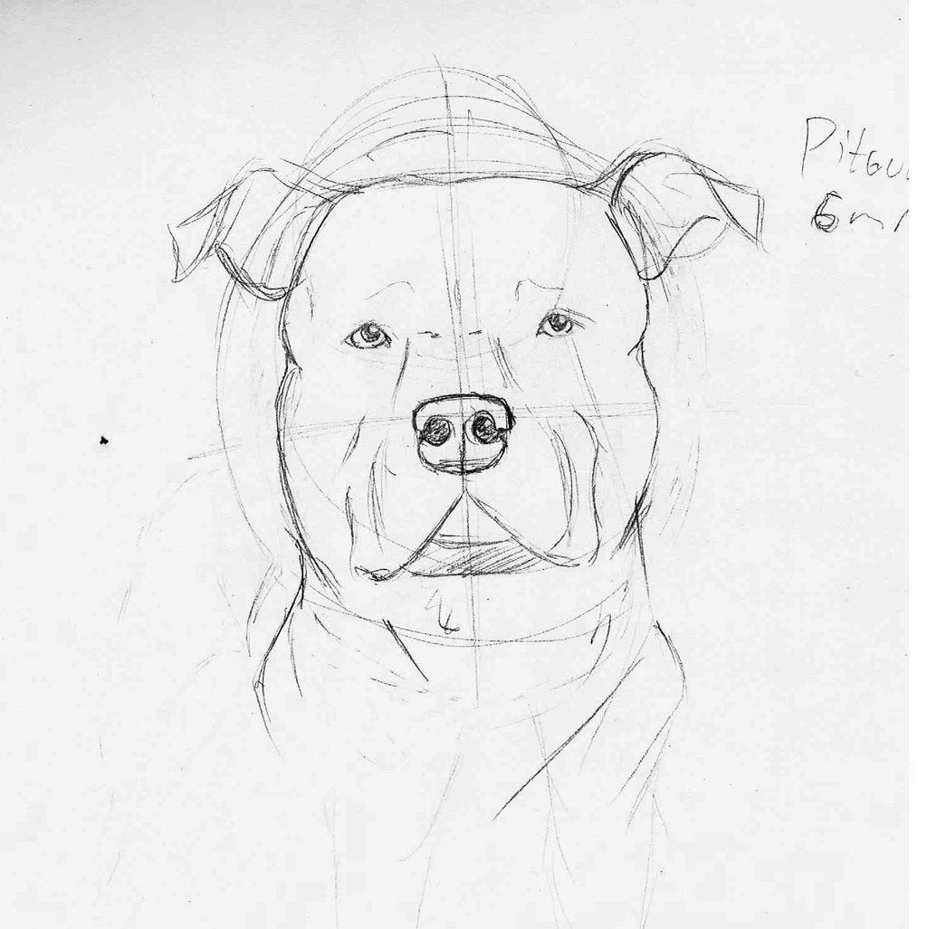How To Draw A Pitbull Face