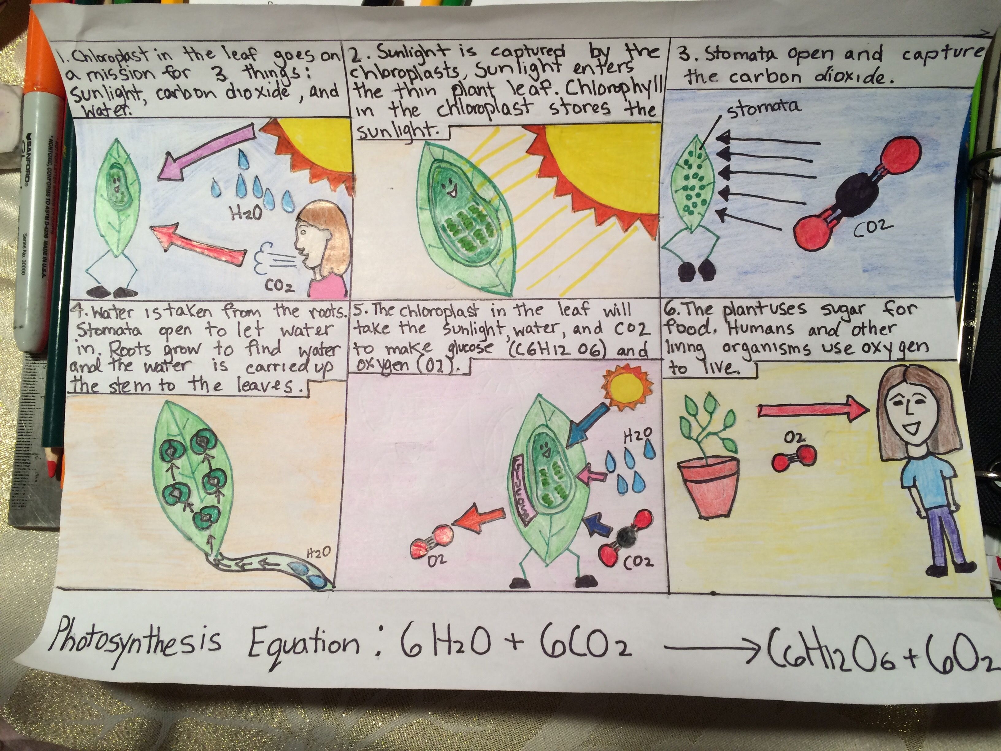 Photosynthesis Comic Strip 7th Grade Science