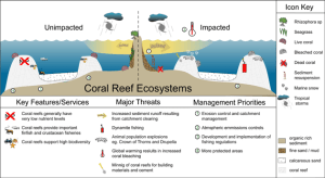 coral reef structure  Szukaj w Google | Ocean education | Pinterest