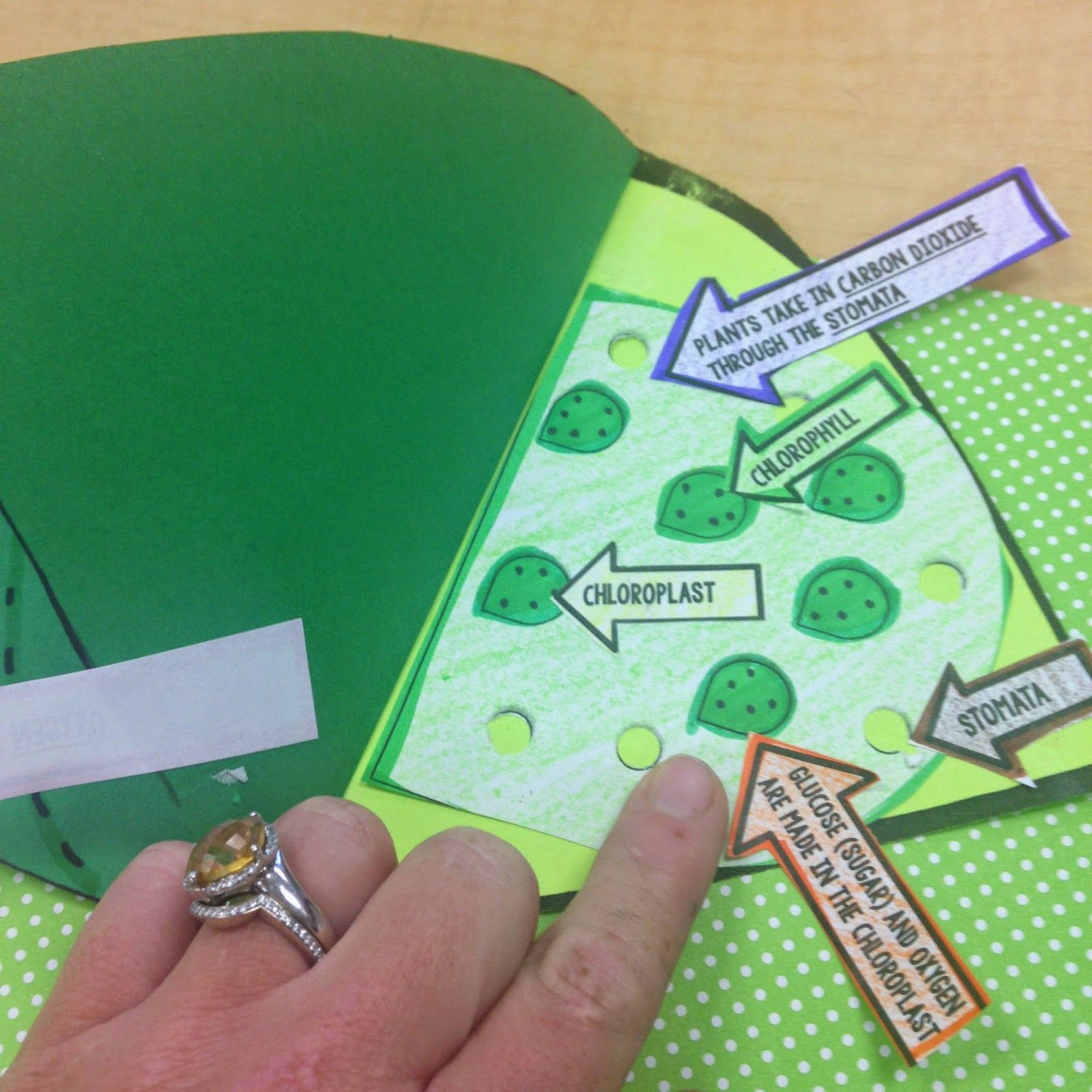Photosynthesis Craftivity Students Visually Show The