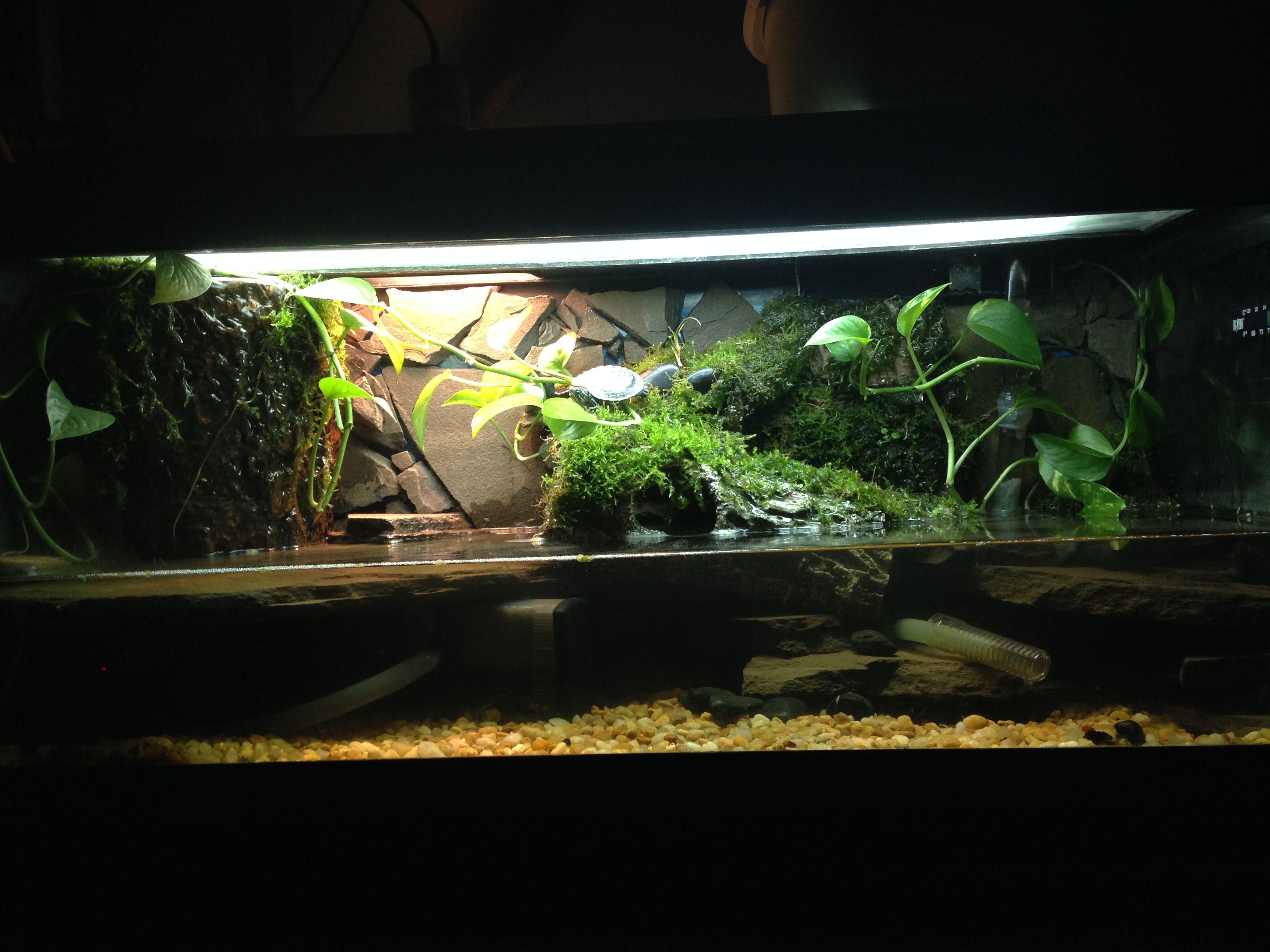 Miniature Turtle In Aqua Terrarium