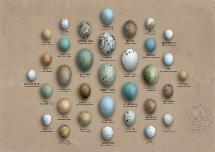 Bird eggs in a pine tree nest description from pinterest