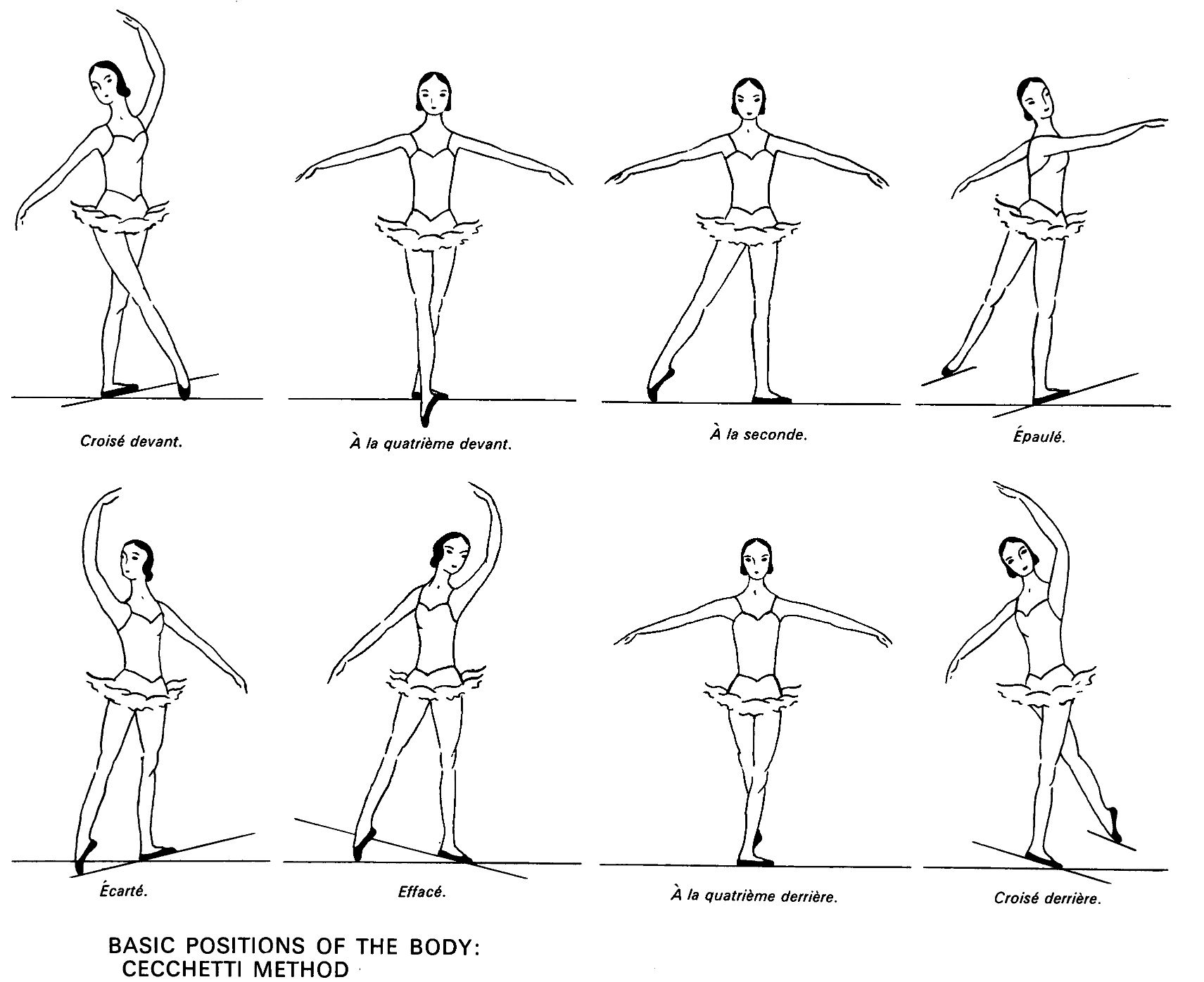 Anatomical Body Positions Worksheet Printable Worksheets And Activities For Teachers Parents Tutors And Homeschool Families