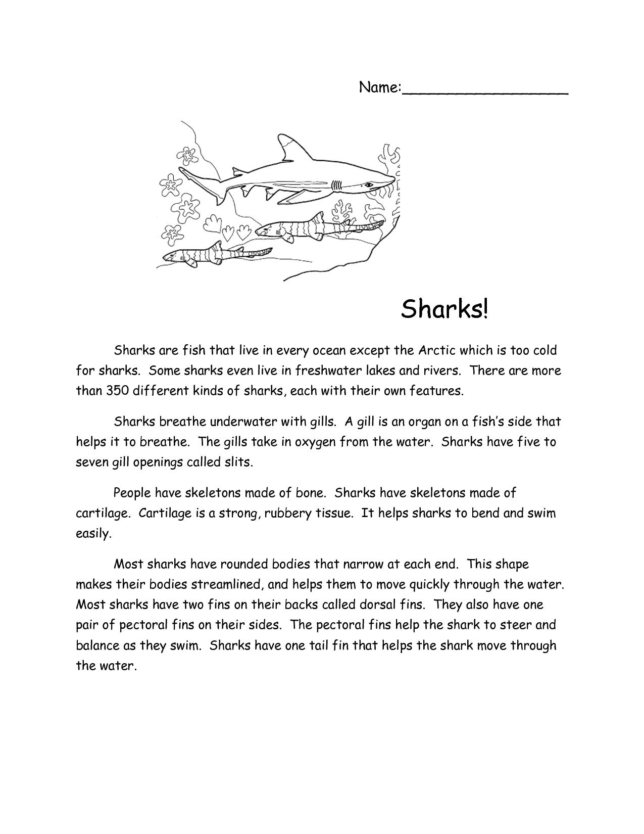 Sharks Reading Comprehension Passage