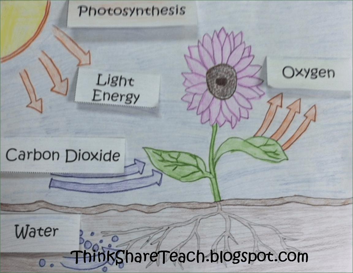 Science Plants 3rd Photosynthesis Worksheet Science Best Free Printable Worksheets