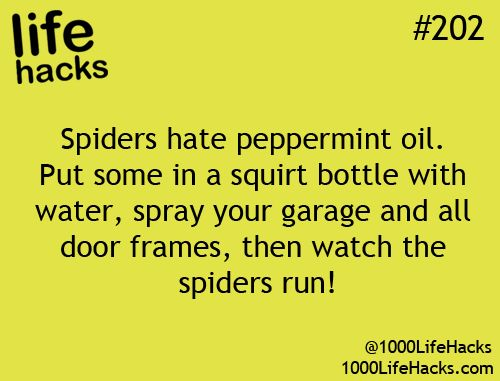 1000 Life Hacks. I have looked for peppermint oil several times because Ill try