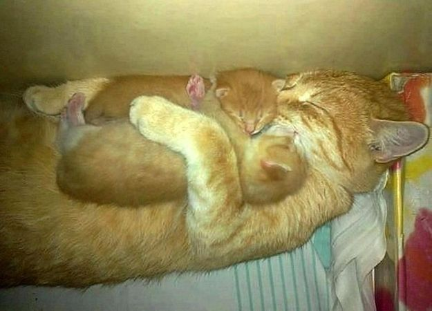 """Can You Make It Through This Post Without Saying """"Awww""""? Mother cat hugging her"""