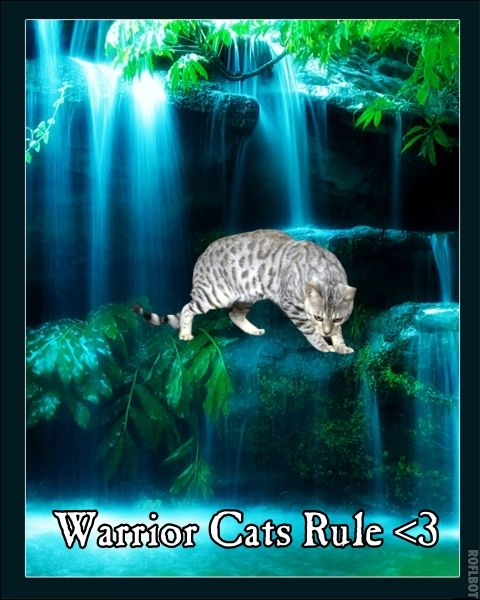 pictures of warrior cats | Warrior Cats Rule