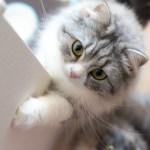 ふわふわ猫