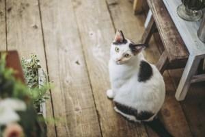猫を飼いたい