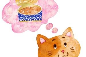猫ウエットフードTOP