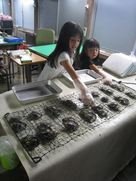 アコヤ貝を選ぶ
