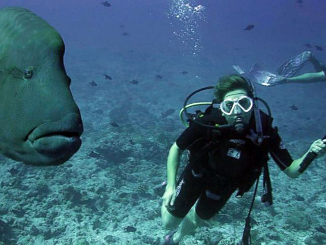 PHOTO: Ginger Zee diving in Palau. Unbeknownst to her she was pregnant at the time.
