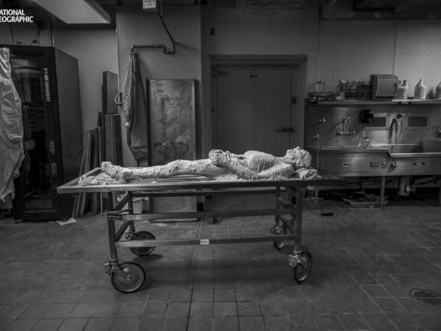 PHOTO: In the first phase of her life after death, Potter lay encased in polyvinyl alcohol in a lab, the prelude to being frozen at minus 15 degrees, sectioned into 27,000 slices, then resurrected as a digital cadaver.