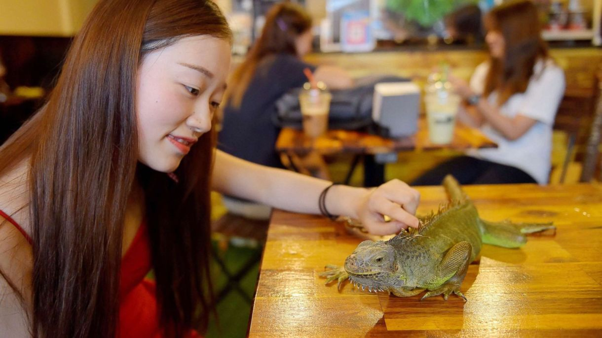Image result for reptile cafe cambodia