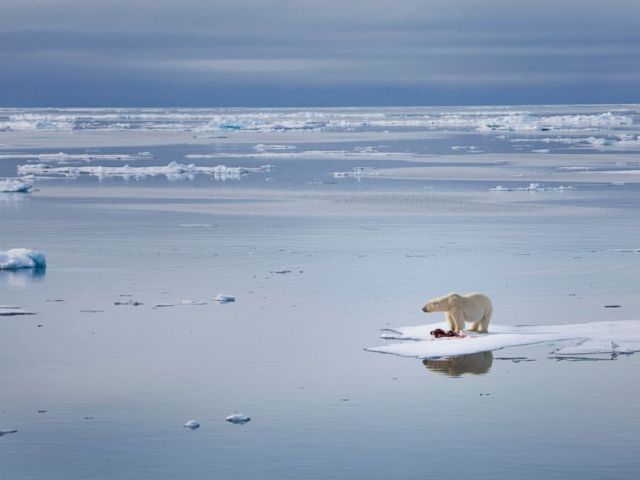 PHOTO: A polar bear is looks for food on a melting glacier in this undated stock image.