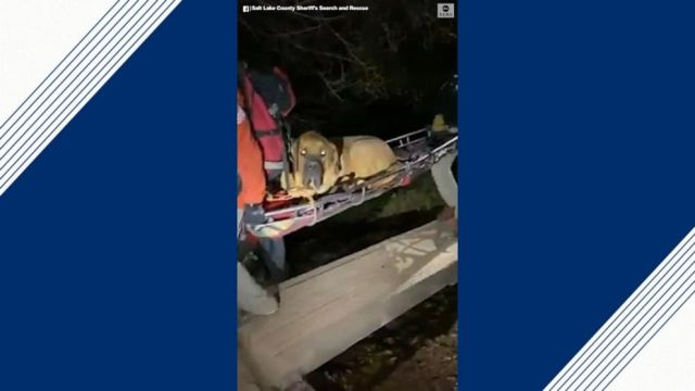 VIDEO: Officials rescue 190-pound dog from hiking trail