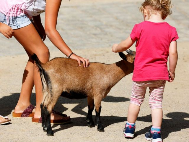 PHOTO: Children pet a goat at a petting zoo in Germany, Aug. 23, 2017.
