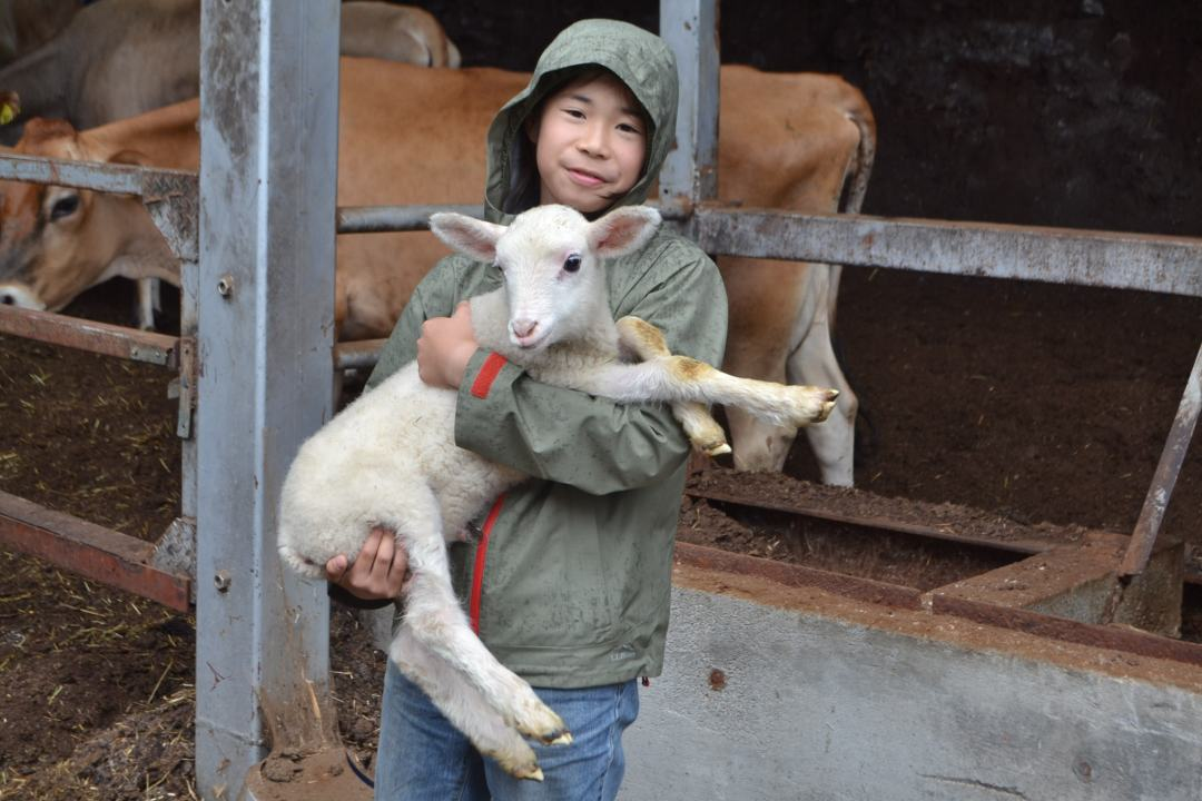 生まれて間もない子ヤギを抱く鷹之介君=八王子市の磯沼ミルクファームで
