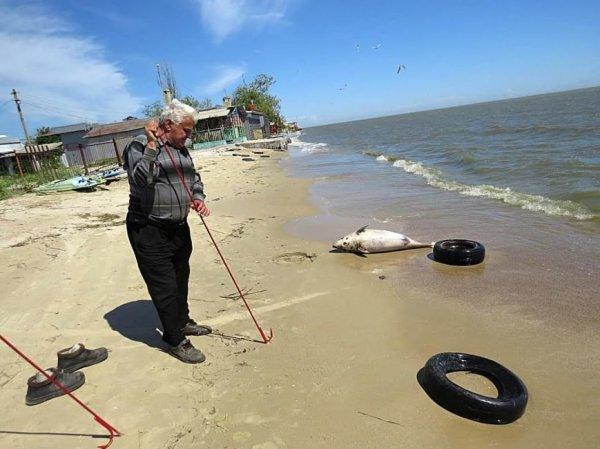 На пляже в Мариуполе нашли огромного дельфина (ФОТО ...