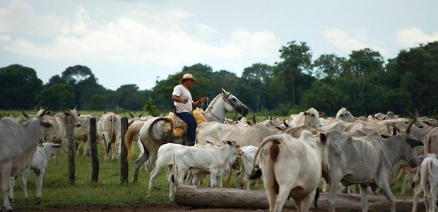 manejo gado cavalo peao bovino equino [Reprodução]