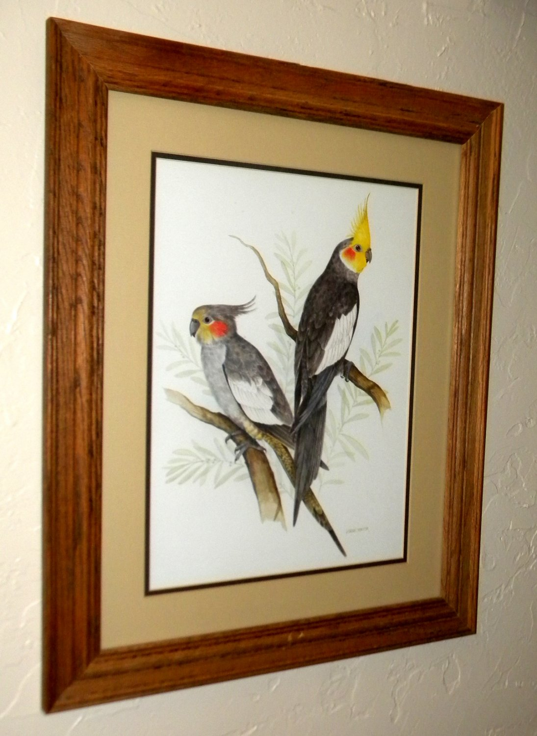 Framed Bird Print - Solid Oak from Rainbow Wall the on-line store for unique gifts.