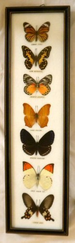 Rainbow Wall  Framed Butterflies