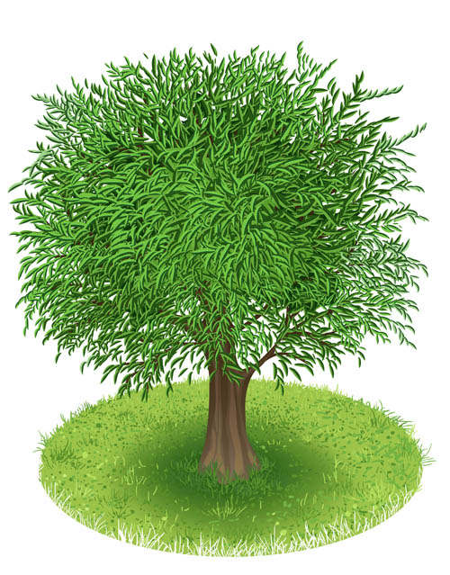 Spring Green Tree Design Vector Graphic 01 Free Free Download