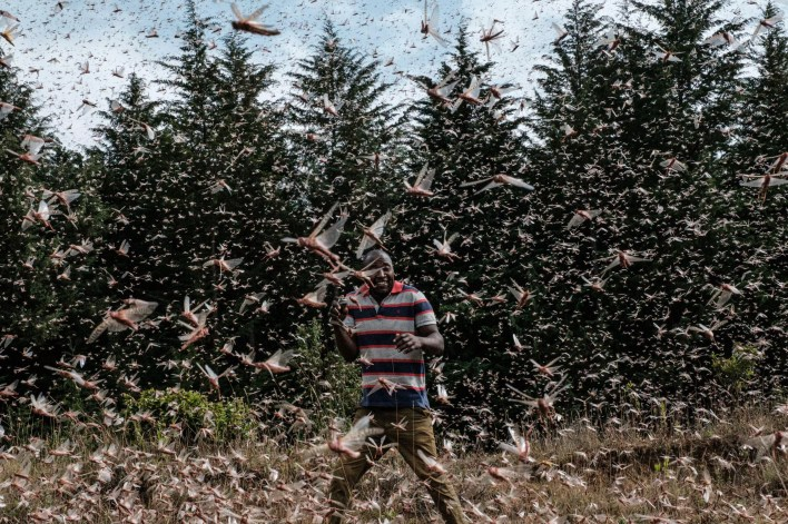 Billions of locusts swarmed East Africa in early 2020 threatening the vast region with a food crisis