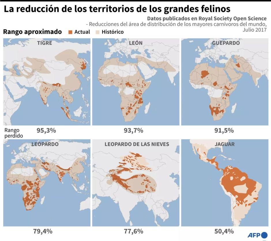 Reducciones del área de distribución de los grandes felinos según datos publicados en Royal Society Open Science, en julio de 2017