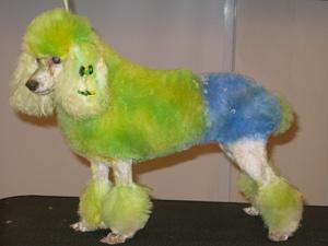 Cães pintados para a Copa
