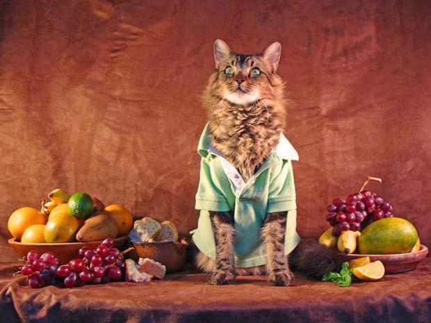 Gato 'Lorenzo' posa para foto ao lado de bandeja com frutas.