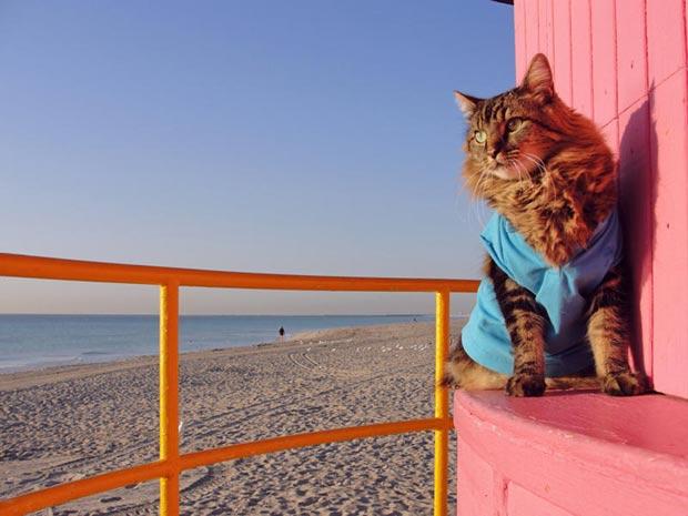Segundo dona, gato adora posar para fotos em trajes da moda.
