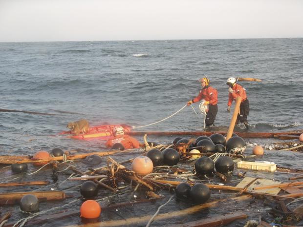 Cão é resgatado do mar nesta sexta-feira (1º) na costa de Kesennuma, no nordeste do Japão, pela Guarda Costeira. Ele estava sobre os destroços de uma casa arrastada pelo tsunami que se seguiu ao terremoto de 11 de março. (Foto: AP)